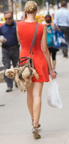 This summer's hottest fashion accessory is…From the NY post. Crossing a BabyBjorn baby carrier with a purse, the stylish blonde slung her Brussels Griffon behind her back like a messenger bag as she talked on her cell phone.  We do not condone this type of transport