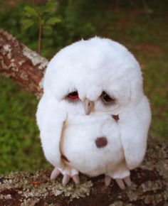 awww...sad owl