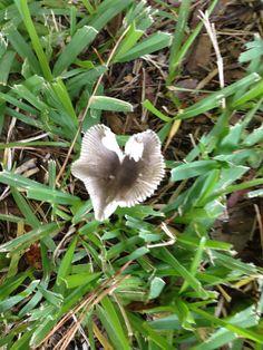 A mushroom in my yard