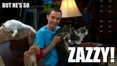 crazy cats, big bang, zazzi, laugh, funni, bazinga, bang theori, bangs, crazy cat lady