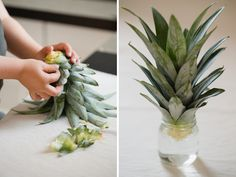 Grow your own pineapples, avocados and green onions indoors. Thanks, Kaley!