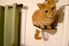 diy cat perches