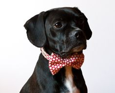 I just LOVE these doggy bow ties! Handmade by SillyBuddy