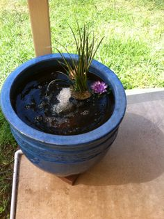 Fish pond in a pot on pinterest for Pond in a pot with fish