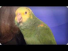 Echo the talking bird