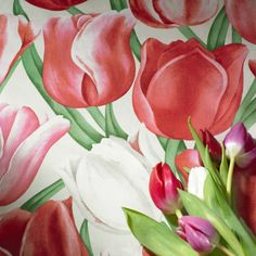 Tulips from Sanderson