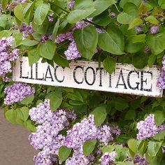 guest cottage, backyard cottage, lilac cottag, garden cottage, cottag sign, flower