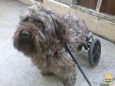 Handicapped dog still gets around in his doggy wheelchair #millionpets
