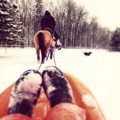 Sledding with horses! Bucket list (: