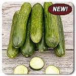 Organic Manny F1 Hybrid Cucumber - Thin-skinned, charming size and sweet flavor! Manny is a spineless and burpless (seedless) Beit Alpha cucumber. Delicious, mild flavor makes this a perfect variety for salads or snacking!
