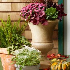 Give mums a boost by surrounding them with attractive companions. For continuity, group various-size pots with a shared color palette. Then fill with mums, coralbells, kale, purple fountaingrass, dusty miller, and juniper.