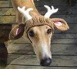 DOG DEER HAT