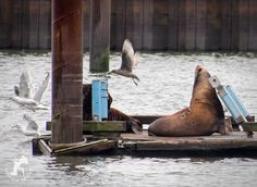 """Where you aware that sea lions are """"branded""""? :("""