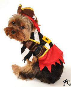 Rustic Pirate Dog Costume