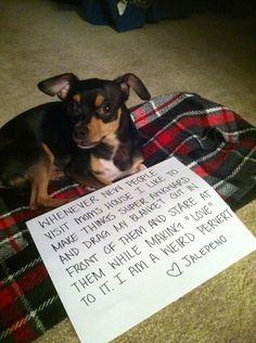 .dog shaming
