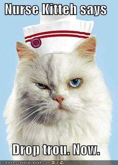 Nurse Kitteh
