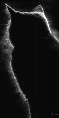 ® 286 / feline