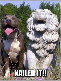 #pitbull imitates classic lion statue pose