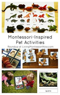Roundup post with lots of Montessori-inspired ideas for pet care and pet-themed learning activities