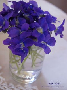 Fussy French violets