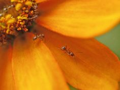Get rid of ants in house naturally