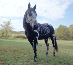 Horse painted like a skeleton for #Halloween