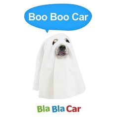 "@Blabla Car's photo: ""Happy Halloween! #Halloween #ghost #dogsofinstagram"""
