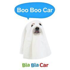 "@Blabla Car's photo: ""Happy Halloween! #Halloween #ghost #dogsofinstagram"""