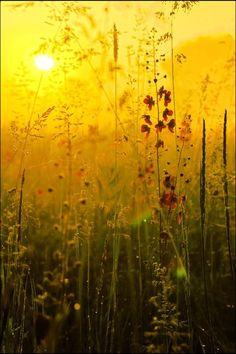 when the morning light hits the garden