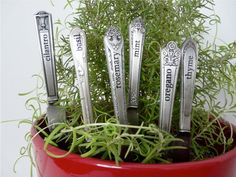 herb plant stakes