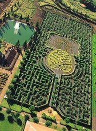 Pineapple Maze at the Dole Plantation - Oahu, Hawaii