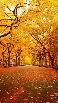 season, autumn leaves, color, parks, fall trees