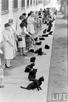 Black cat audition.