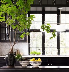Everything about this space is divine.  Black cabinets and window trim.  Big beautiful indoor tree.