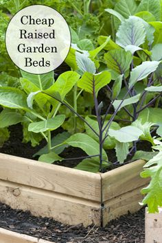 Making raised garden beds can get expensive once you factor in all the needed materials. Here is how to have raised beds in your garden for very little or no money.