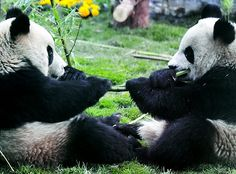 Sharing can be hard, but what's a stick of bamboo between friends?