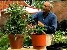 How to Vegetable Garden in pots - YouTube