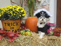 Halloween Photo Contest: Lily the Pretty Pirate