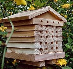 Bee hive for natives.