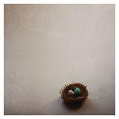 Bird Nest Photo Tiny nest eggs blue white by BitsofLifeImages, $30.00
