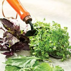 easy to grow veggies and herbs