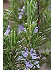 How to Grow Herbs - Organic Herb Gardening