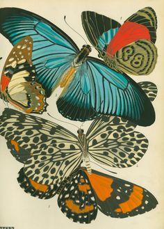 Artist: E.A.Seaguy | Source: Tidepooler | #butterflies #illustrated