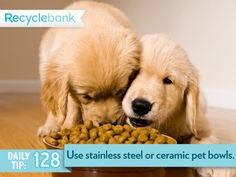 Great Idea: Purchase stainless steel or ceramic pet bowls instead of plastic. These materials last longer & don't have to be replaced as often, eliminating waste.