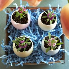 plants in eggs great for easter center pieces