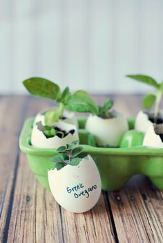 Eggshell Seed Starters - Three in Three