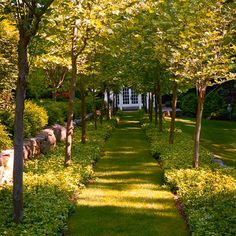 """""""I advocated terracing to create level spaces and garden areas,"""" Hayward says. """"For example, a 300-foot allée of pollarded sycamores is supported by a pair of native-stone retaining walls."""""""