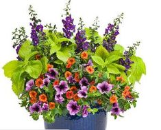 The Garden Geeks Container Recipe of the Day. Full Instructions