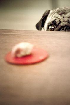 want pug