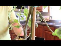 Tips For Tomato Plants - Planting the perfect garden. This was so helpful!